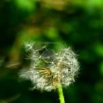Los conflictos del deseo